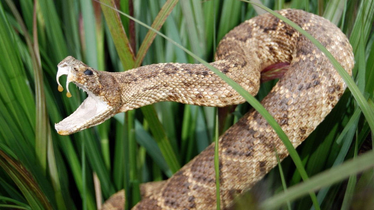 Keep Snakes Away With Our Repellent Treatments